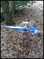 dog holding umbrella