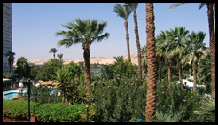 Egypt palm trees