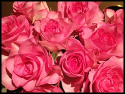 pink roses of love