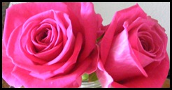 nice twins pink roses