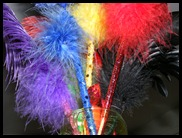 colourful feathers of life