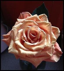 orange rose of healing