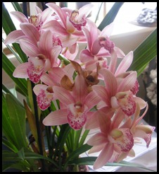 pink orchids of healing