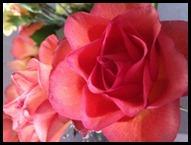 healing-rose_thumb6