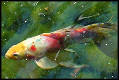 colourful fish of life