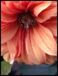 practical bee