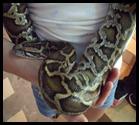 snake in Emily Dawson's hand