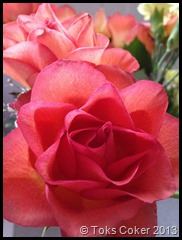 Toks Pink Rose