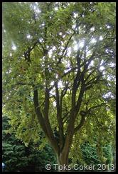 nice sun tree