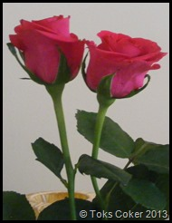 nice twins souls pink roses