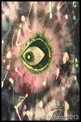 Eye_Pollard