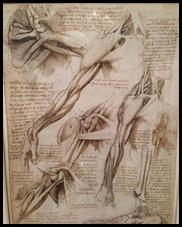 Leonardo's Drawings