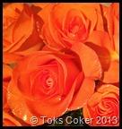 glitter orange roses