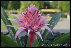 Seed & Flower