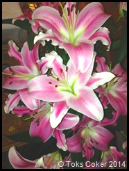 Happy Blooming Lillies