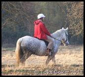 Richmond Park Horse