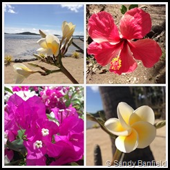 Fijian flowers by Sandy Banfield
