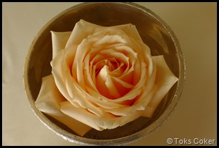 yellow rose in gold