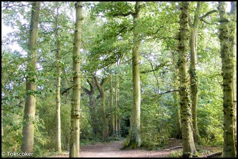 happy tree pathway