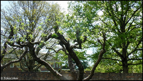 seeding trees
