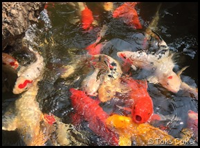 open fish hungry fish